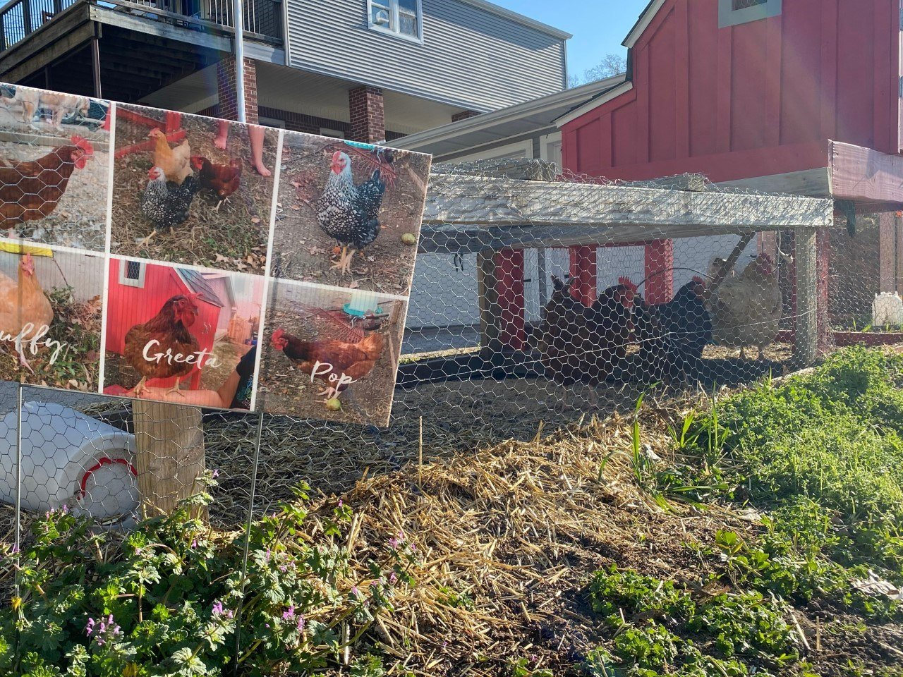 Dunster proposes urban poultry