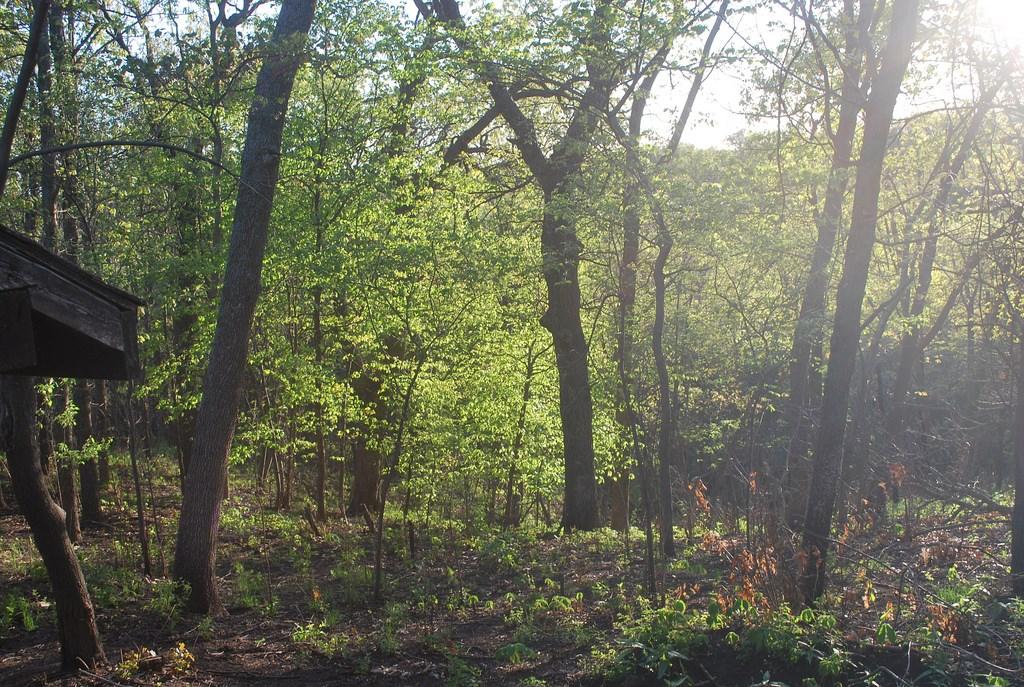 Volunteer work set for trails day