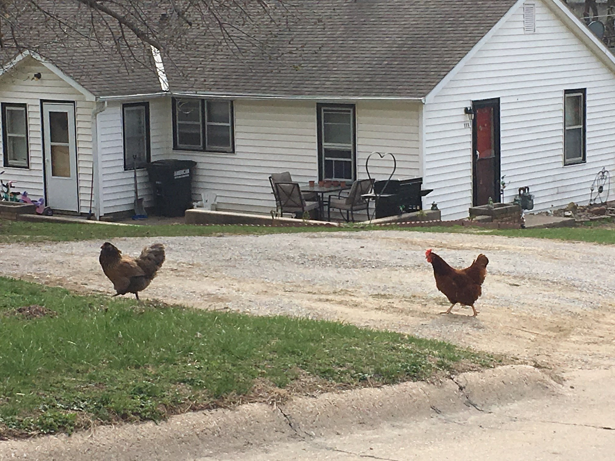 Chickens protested at Syracuse meeting