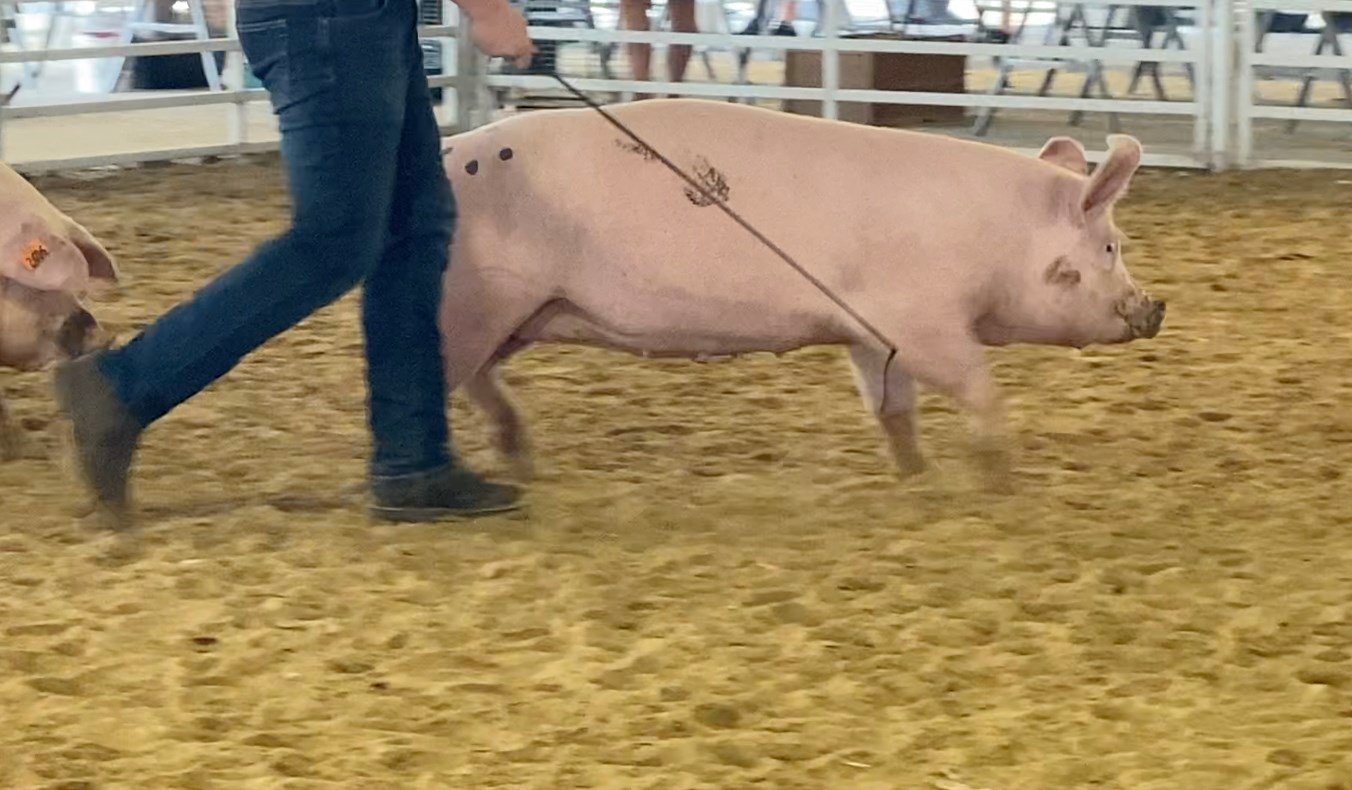 Swine show making some noise at Richardson County Fair