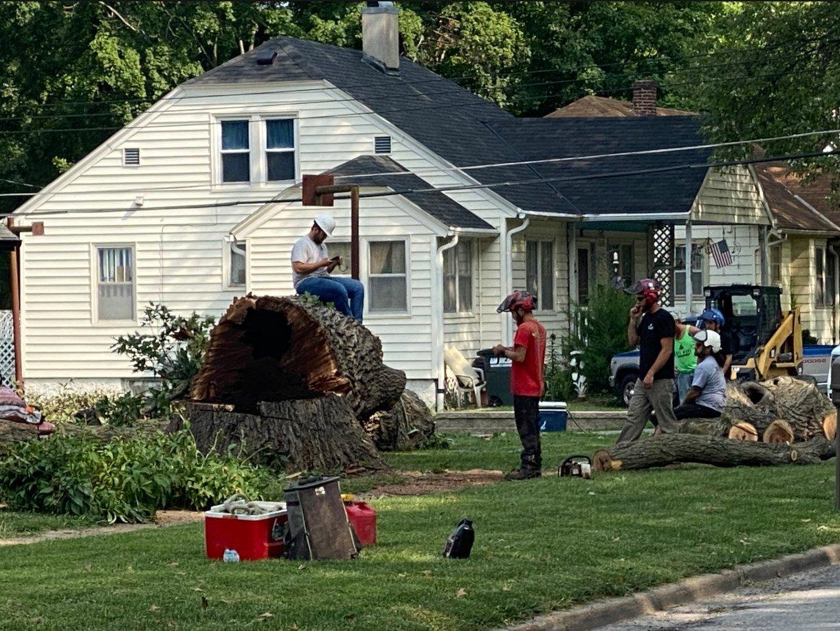 Oak tree older than United States comes down in Nebraska  City